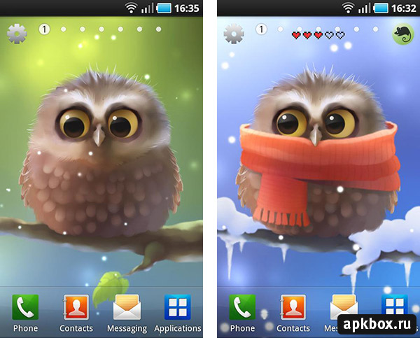 Little Owl Live Wallpaper