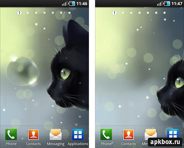 Curious Cat Live Wallpaper